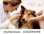 Team of veterinarian check sick ...