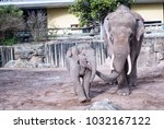mother and child elephant | Shutterstock . vector #1032167122
