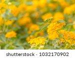 beautiful yellow colorful... | Shutterstock . vector #1032170902