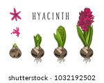 botanical set home garden... | Shutterstock .eps vector #1032192502