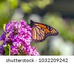 monarch butterfly  danaus... | Shutterstock . vector #1032209242