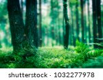 magic green forest with magic... | Shutterstock . vector #1032277978