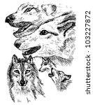 wolf sketch in vector | Shutterstock .eps vector #103227872