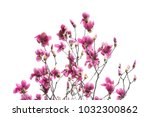 magnolia branch isolated on... | Shutterstock . vector #1032300862