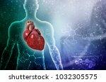 3d illustration  anatomy of... | Shutterstock . vector #1032305575