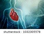 3d illustration  anatomy of... | Shutterstock . vector #1032305578