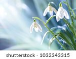 spring snowdrop flowers with... | Shutterstock . vector #1032343315