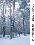 Small photo of Winter in the Pine Forest. Nature in the vicinity of Pruzhany, Brest region, Belarus.
