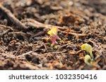 power of life | Shutterstock . vector #1032350416