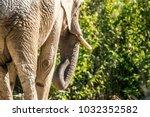 detail rear view of african... | Shutterstock . vector #1032352582