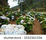 flowera in brazil | Shutterstock . vector #1032361336