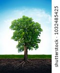 tree with roots isolated on... | Shutterstock . vector #1032485425