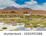 andes region  bolivia with... | Shutterstock . vector #1032492388