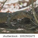 lizard in forest. | Shutterstock . vector #1032502675