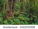 rainforest near milford sound ... | Shutterstock . vector #1032533308