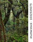rainforest near milford sound ... | Shutterstock . vector #1032535075
