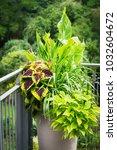 Various Ornamental Plants In...
