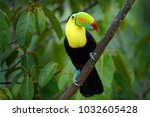 wildlife from costa rica ... | Shutterstock . vector #1032605428