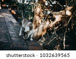 Brown Cat Walk On Wooden Floor...