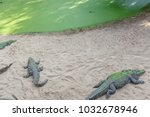 Small photo of A scene where a Crocodiles are basking in sun at Madras Crocodile Bank. With selective focus on the subject.