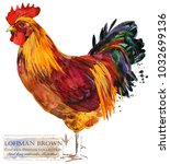 lohman brown rooster. poultry... | Shutterstock . vector #1032699136