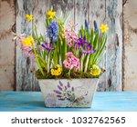Fresh Beautiful Spring Flowers...