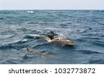 group of long beaked dolphins... | Shutterstock . vector #1032773872