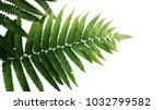 green leaves fern tropical... | Shutterstock . vector #1032799582