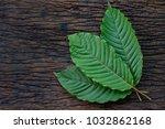 kratom or mitragyna speciosa... | Shutterstock . vector #1032862168