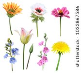set of flowers on a white... | Shutterstock . vector #1032867586