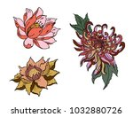 hand drawn peony flower lotus... | Shutterstock .eps vector #1032880726