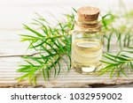 fresh tea tree twig and... | Shutterstock . vector #1032959002
