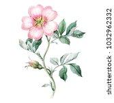 watercolor botanical rose....   Shutterstock . vector #1032962332