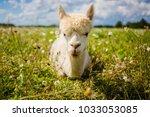 portrait of a cute pretty white ... | Shutterstock . vector #1033053085