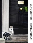 Small photo of London, UK. 08 March, 2017. Larry Chief Mouser to the Cabinet Office garding Number 10, Dowing Street.