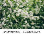 spring background of branches... | Shutterstock . vector #1033063696