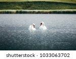 two swans in swan lake. swan... | Shutterstock . vector #1033063702