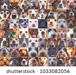 56 dog heads in a poster... | Shutterstock . vector #1033082056