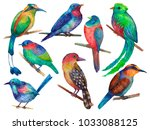 set of exotic colorful birds... | Shutterstock . vector #1033088125
