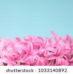hyacinth pink surprise dutch...   Shutterstock . vector #1033140892