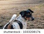 cute happy puppy   Shutterstock . vector #1033208176