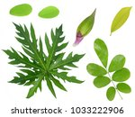 leaf collection on white... | Shutterstock . vector #1033222906