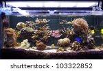 Aquarium Coral  Reef Tank ...