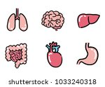 internal organs  set | Shutterstock .eps vector #1033240318