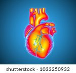 3d colorful human heart... | Shutterstock . vector #1033250932