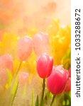 beautiful pink tulip flowers... | Shutterstock . vector #1033288672