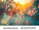 Stock photo spring blossom background beautiful nature scene with blooming tree and sun flare sunny day 1033292395