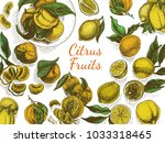 vector sketch background fruit. ... | Shutterstock .eps vector #1033318465
