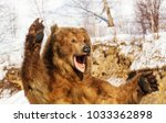 taxidermy of a kamchatka brown... | Shutterstock . vector #1033362898