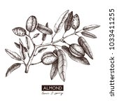 vector almond illustration.... | Shutterstock .eps vector #1033411255